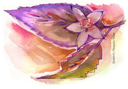 http://file.tanakaharuo.blog.shinobi.jp/0037_.jpg