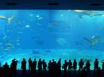 美ら海水族館 クマノミちゃん