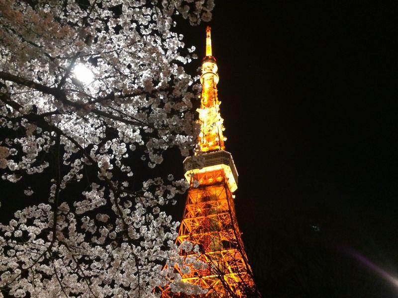 東京タワー近くの夜桜