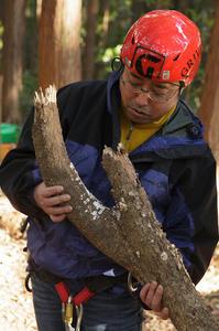 ツリークライミング木
