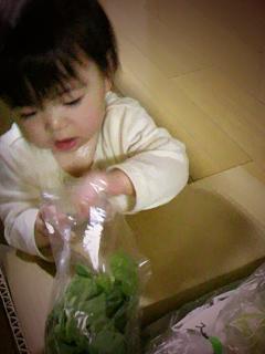 茨城から野菜