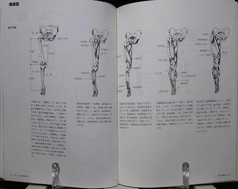 やさしい美術解剖図中身04