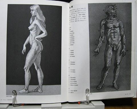 やさしい美術解剖図中身08