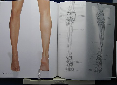 AnatomyfortheArtist中身05
