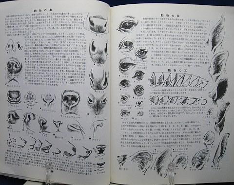 動物の描き方中身01