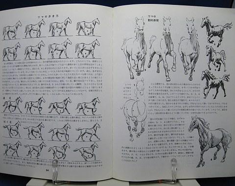 動物の描き方中身05