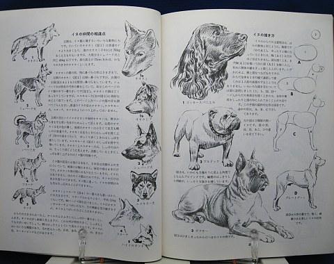 動物の描き方中身06