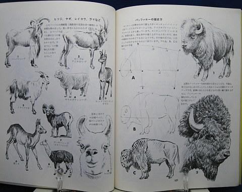 動物の描き方中身07