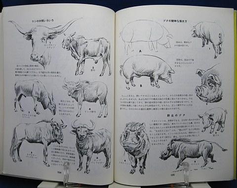 動物の描き方中身08