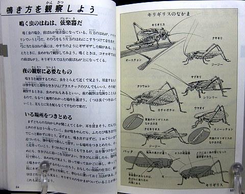 自然図鑑中身02