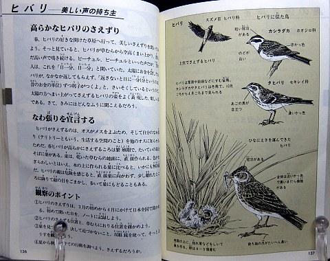 自然図鑑中身03