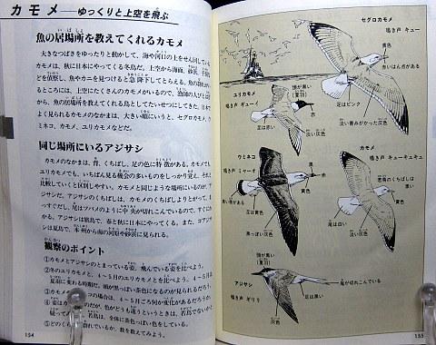 自然図鑑中身04