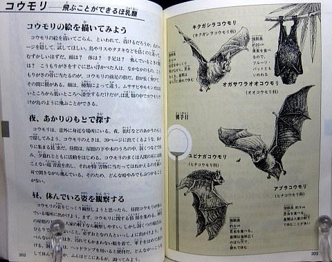 自然図鑑中身05