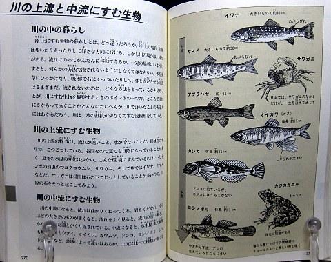自然図鑑中身08