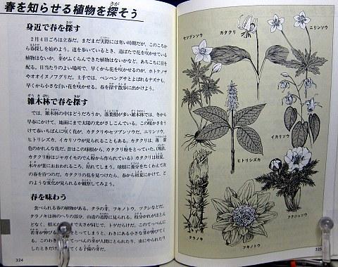 自然図鑑中身10