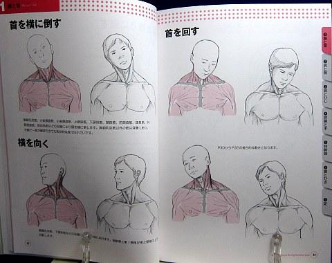 骨と筋肉がわかる人体ポーズ集中身02