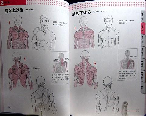 骨と筋肉がわかる人体ポーズ集中身03
