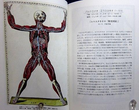 人体解剖図中身02