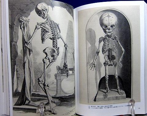人体解剖図中身03