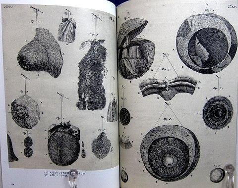 人体解剖図中身05
