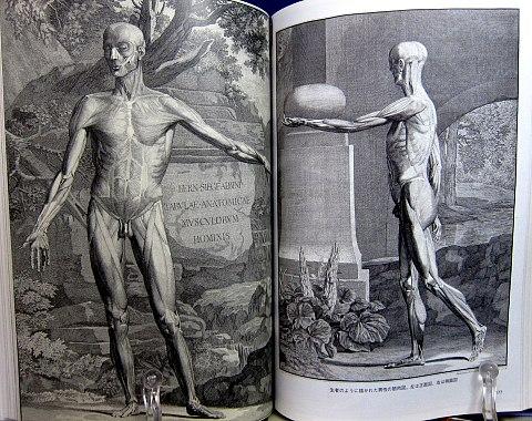 人体解剖図中身06