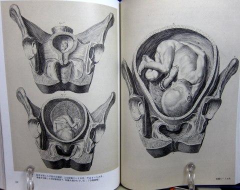 人体解剖図中身08