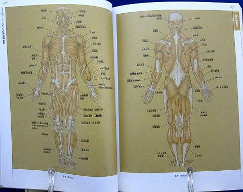 アーティストのための美術解剖学中身03