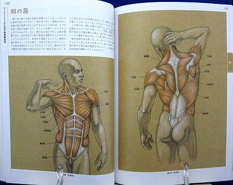 アーティストのための美術解剖学中身05