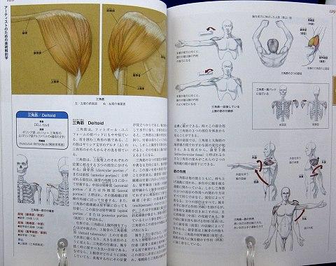 アーティストのための美術解剖学中身06