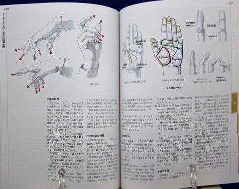 アーティストのための美術解剖学中身08