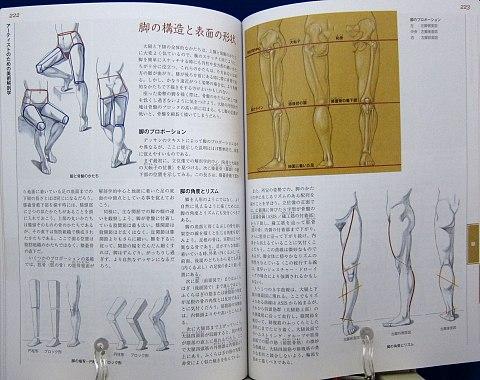 アーティストのための美術解剖学中身09
