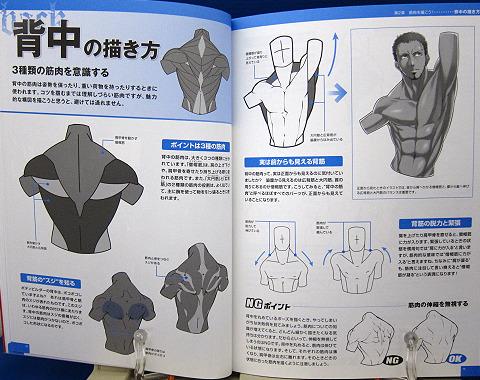 魅せる!男の筋肉を描く中身03