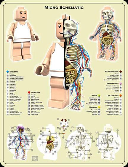 ミニフィグの解剖図