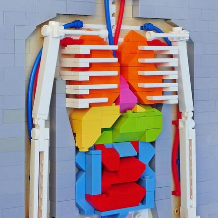LEGO製人体模型