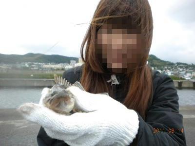 2011-06-14-007 小樽港 ソイ