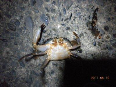 2011-08-19-002 石狩港 カニ