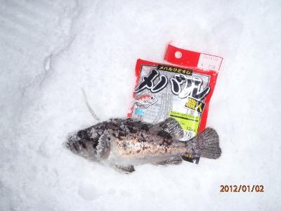 2012-01-02-002 余市港 クロソイ