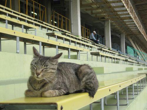 荒尾競馬場 猫
