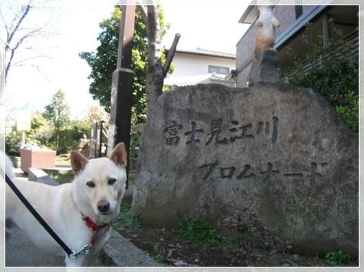 201103192.JPG