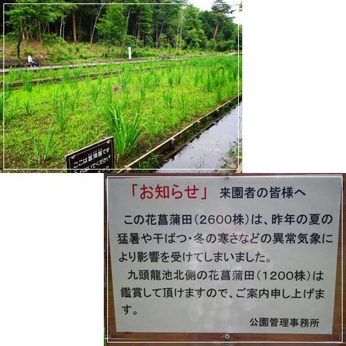 201106145.jpg