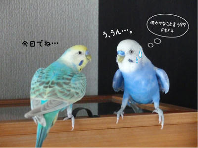 merry_sun.kaiwa2.jpg