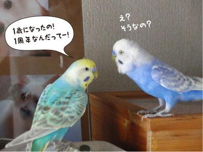 merry_sun.kaiwa3.jpg
