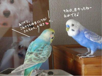 merry_sun.kaiwa4.jpg