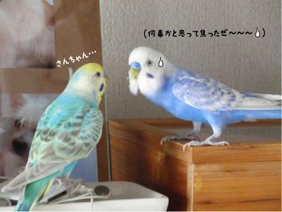 merry_sun.kaiwa5.jpg