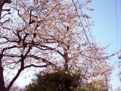 """画像ファイル """"http://file.ituwara.blog.shinobi.jp/CIMG1160.jpg"""" は壊れているため、表示できませんでした。"""