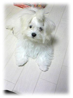 """画像ファイル """"http://file.ituwara.blog.shinobi.jp/907c8ea0.jpeg"""" は壊れているため、表示できませんでした。"""