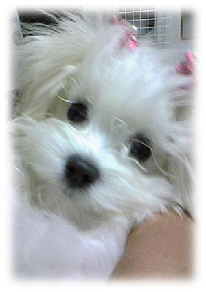"""画像ファイル """"http://file.ituwara.blog.shinobi.jp/611bd9cf.jpeg"""" は壊れているため、表示できませんでした。"""