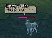 オオカミの本音