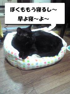 寝るギンジ