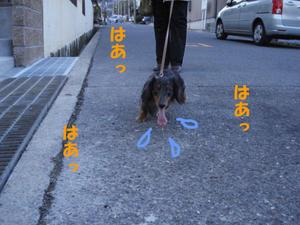 散歩必死兜2